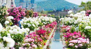 今週末が見頃!長崎ハウステンボス「2,000品種120万本のバラ祭」